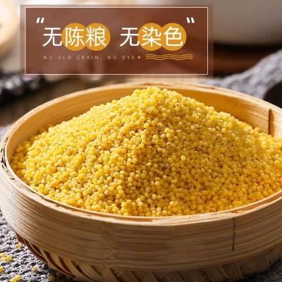张家口蔚县绿色食品黄小米 五斤装包邮