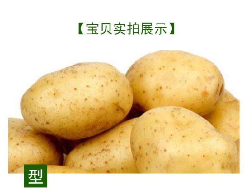 城步县红薯妹-1800米高海拔种植土豆50斤
