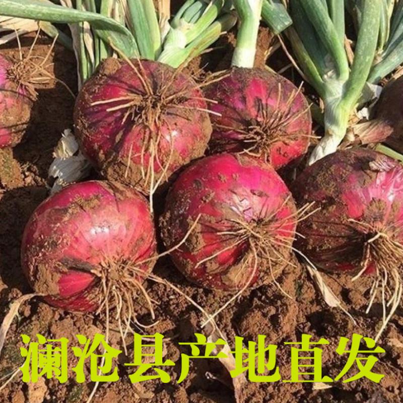 【助农】云南澜沧县紫皮洋葱农家自种新鲜蔬菜5KG